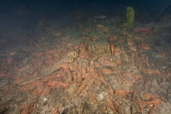 "Unique Scorpionfish ""Nesting Den"" Habitat in Corsair wreckage site (UPDATE)"